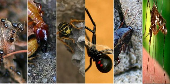 Integrated pest management and efficient pest control