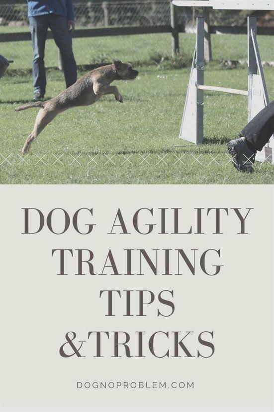 Dog Training Kindle Books Dog Training Pads 100 Dog Training