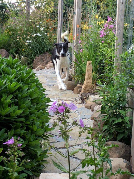 8 Backyard Ideas To Delight Your Dog Dog Backyard Backyard Fences Backyard Dog Area