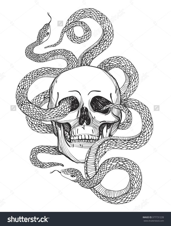 Stock Vector Skull And Snake Tattoo Art Coloring Books Hand Drawn Vintage Vector Illustration Isolated On 37773 Skulls Drawing Snake Art Vintage Coloring Books