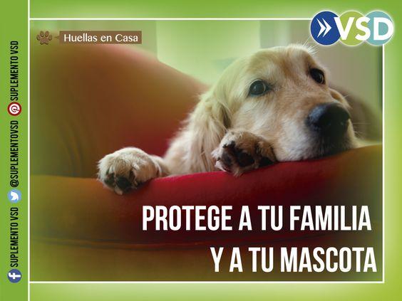 Mantener la salud e higiene de los animales es sinónimo de proteger a tu familia, los expertos aconsejan en #HuellasEnCasa.