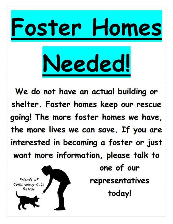 Foster homes needed #Utah #cat