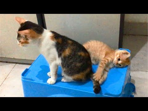 Cat Angry Because Kitten Keeps Annoying Her Feel Free To Subscribe