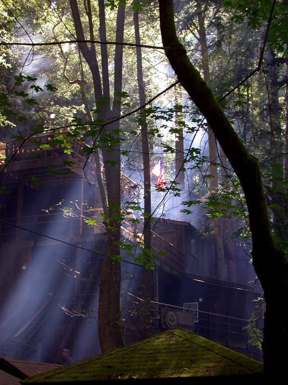 The Bohemian Grove - Redwood Forrest in CA