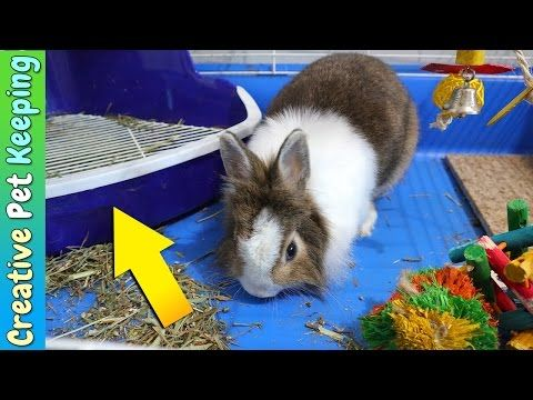 HOW TO litter train your rabbit in one week | Bunny Potty Training ...