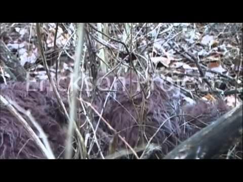 Bigfoot Evidence: Breaking: Someone Just Took Photographs of Bigfoot Climbing a Tree