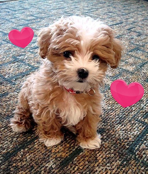 Would You Give Me A Nice Name Dog Dog Puppy Pup Cute Eyes Instagood Dogs Of Instagram Pet Pets Animal A Cute Animals Pets Dog Breeds That Dont Shed