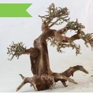 Decorate your aquarium with #attractive_driftwood_pieces. It is available in different sizes at the bonsai driftwood store.