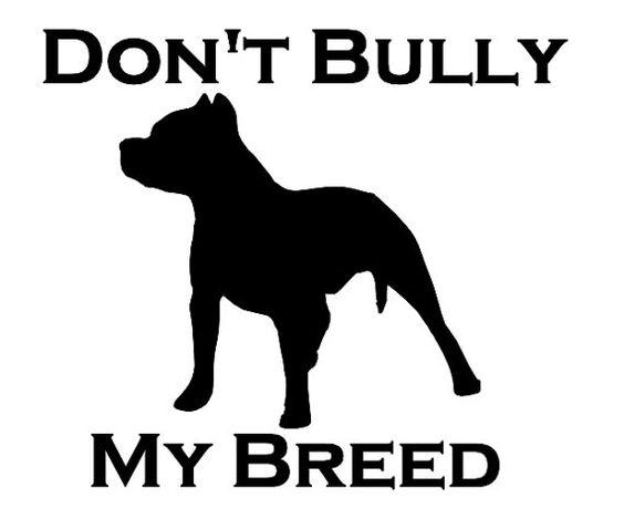 bullies pitbull and pitbulls on pinterest