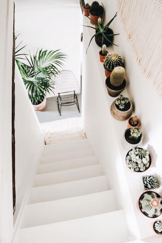 plantes d'intérieur dans l'escalier