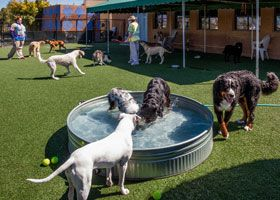 Luxury Dog Boarding Kennels | Escondido Pet Kennel Offers Luxury Dog & Cat Boarding