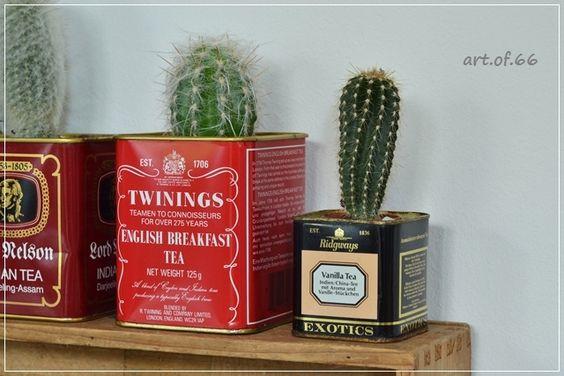 Kaktus - cactus - Twinings - tea caddy