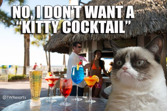 grumpy cat florida and cocktails on pinterest