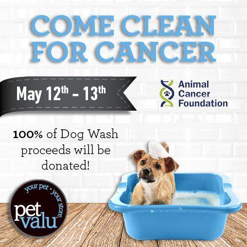 Pet Valu Us On Dog Wash Cancer Foundation Your Pet