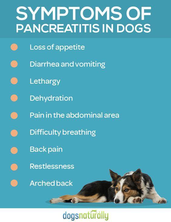 Dog Pancreatitis 11 Steps For Natural Healing Pancreatitis In