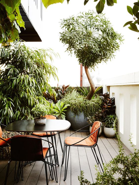 Design files ficus and rooftop gardens on pinterest for Terrace trees