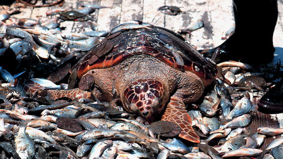 are the oceans being overfished essay Of all the threats facing the oceans today, overfishing takes the greatest toll on sea life – and people what is overfishing overfishing is catching too many fish at once, so the breeding.