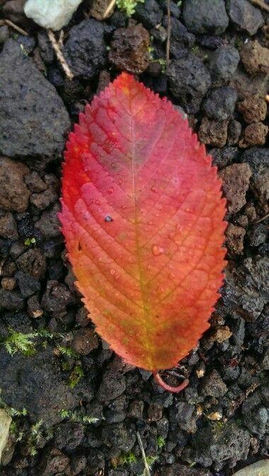 Autumn red-orange