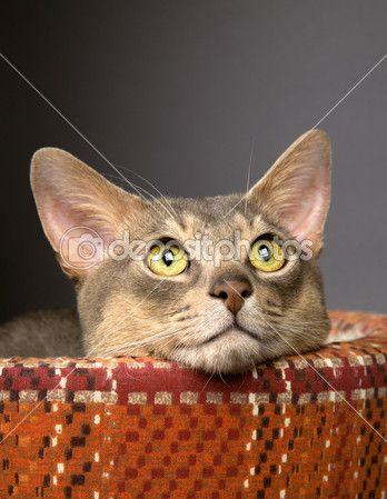 Gato Fotografias, Gato Imagens Royalty Free | Depositphotos®