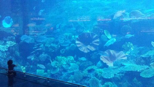 Dubai Shoppingmall  Babygirl  & Bigfish