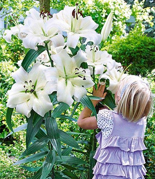 Dahlie Myrtle S Folly Dahlien Bei Baldur Garten Dahlien Dahlien Blumen Blumensamen