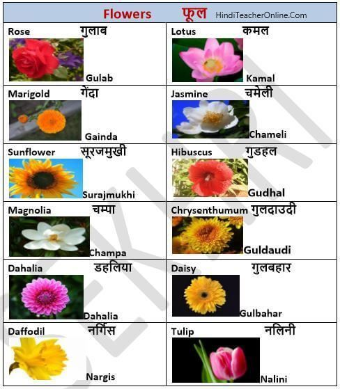Hindi Charts For Kids Flowers Charts For Kids Flower Names Flowers Name In Hindi
