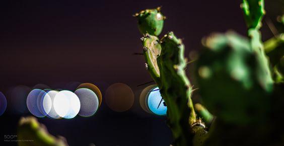 Cactus by eliasharrak1. Please Like http://fb.me/go4photos and Follow @go4fotos Thank You. :-)