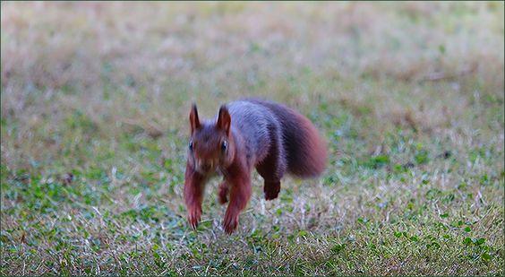 Springendes Eichhörnchen - Jahreszeiten - Galerie - Community