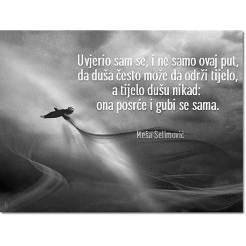 M Selimovic In 2020 Beast Quotes Quotes More Than Words