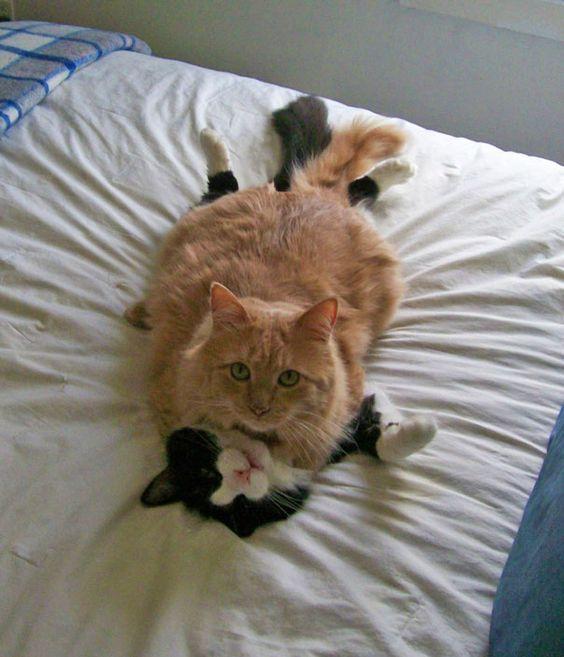 14 chats se préparant secrètement pour la Saint-Valentin