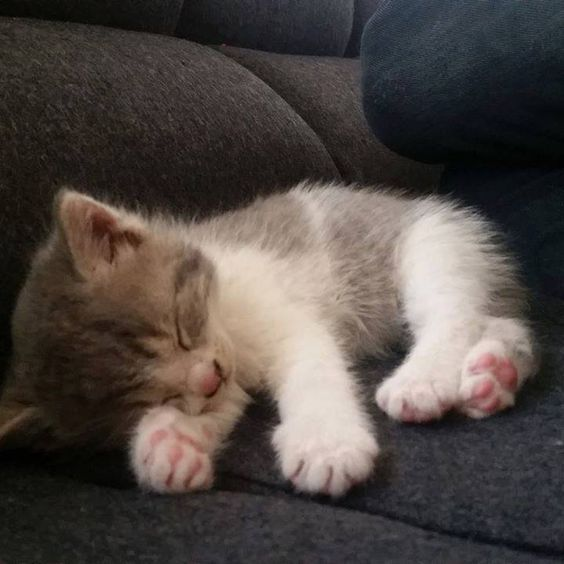 Sweet Dreams Little Kitty Click The Photo For More Cute Cat