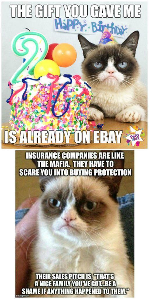Top 20 Grumpy Cat Memes School Fallout Memes Grumpy Cat Cat Memes Grumpy
