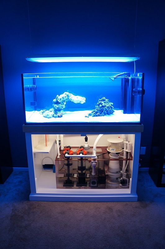 Rimless Aquarium Club - Page 51 - Reef Central Online Community sick sump