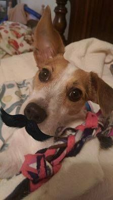 #movember #caninehealthawarness #mustacheadog #weloveyourdog #runwagranch #doglife #dog