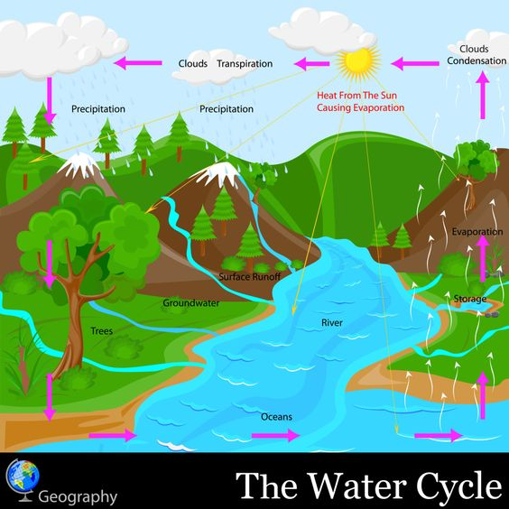 The Water Cycle Involves All Except Evaporation Precipitation ...