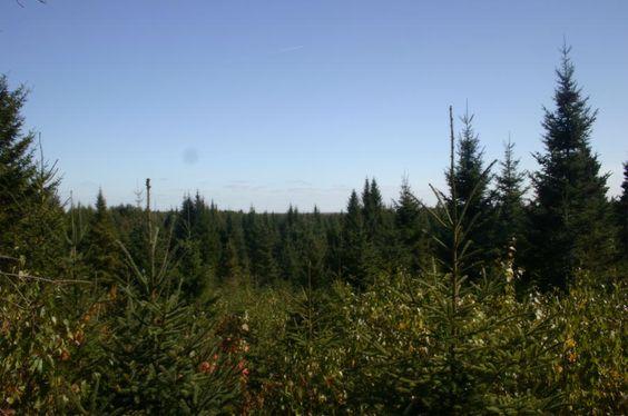 Forêt privé