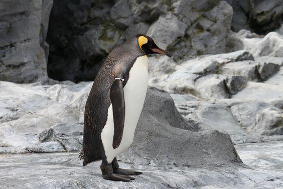 旭山動物園にて