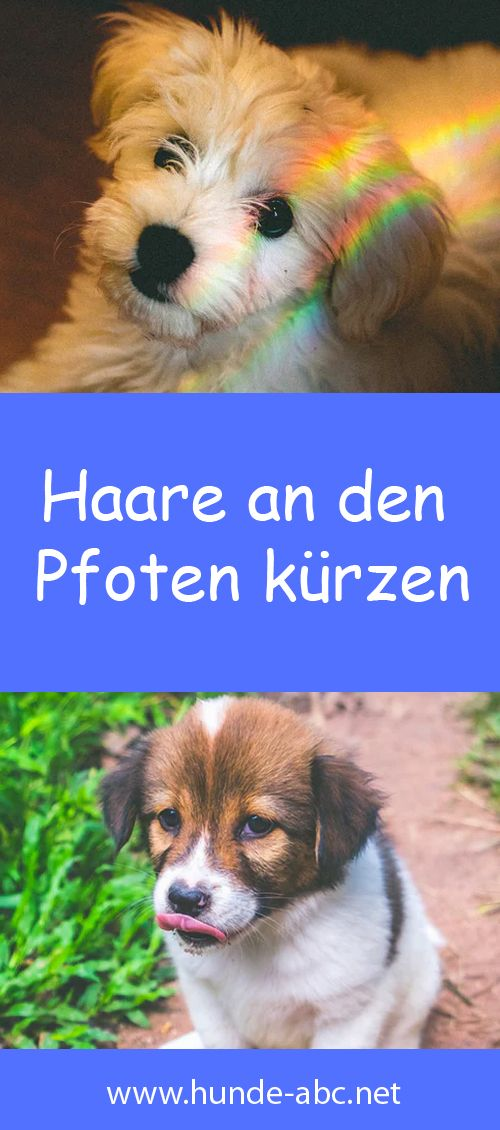 Haare An Den Pfoten Kurzen In 2020 Pfoten Hunde Pflege