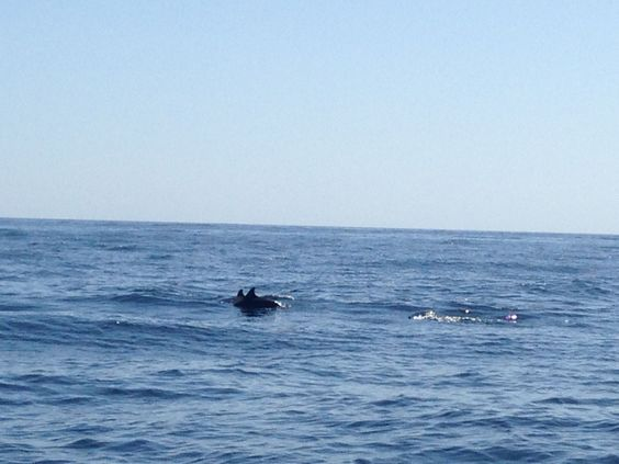 Spotting Dolphins in Oman