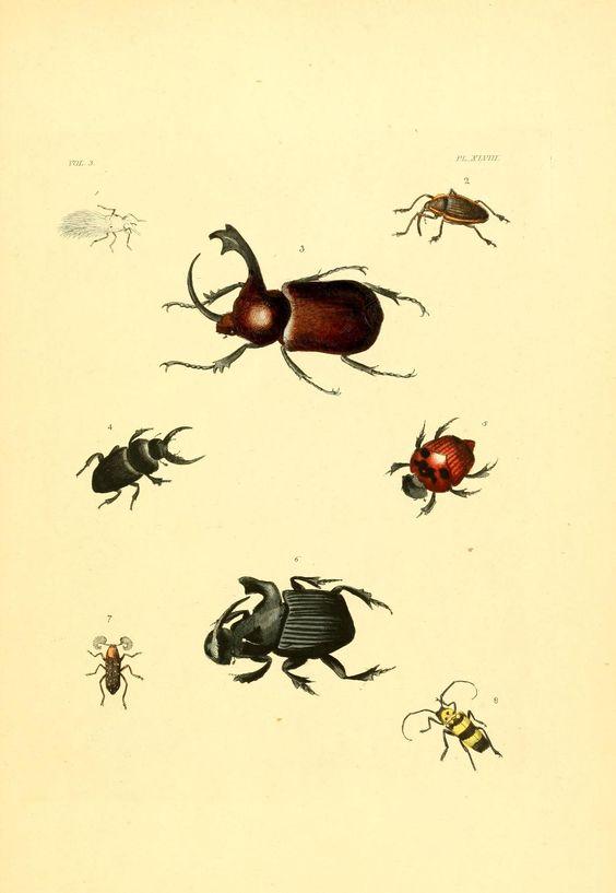v. 1-3 (1837) plates - Illustrations of exotic entomology : - Biodiversity Heritage Library
