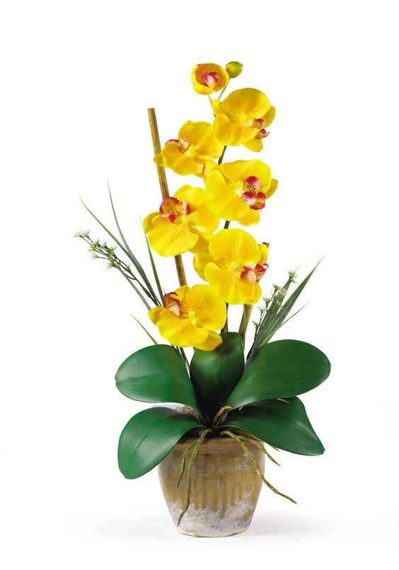Phalaenopsis Silk Orchid Flowers in Yellow