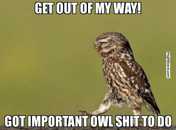 Important owl shit to do.