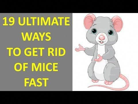 How To Get Rid Of Mice In Your House Amazing Tips For Getting