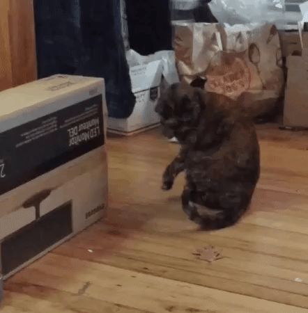 Are cats supposed to do this? http://ift.tt/2huk5Ns