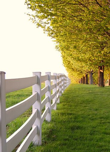 "I often dream of having this be where I live, white picket fence, green grass and TONS of big trees...ahhh the ""country"" life!: White Picket Fences, Fence Green, Country Fence, Dream Home, Country Life, White Fences, Don T Fence"
