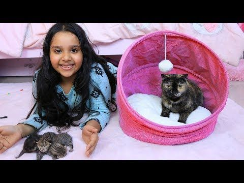 قطة شفا ولدت Youtube Cute Kitten Gif Kittens Cutest Kitten Gif