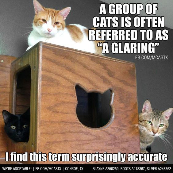 Cats... being cats. <img src=