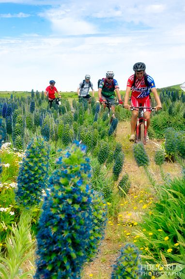 Madeira - Biking. Photo by Hugo Reis