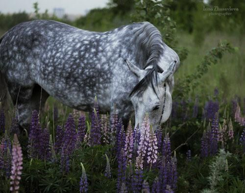 Imagen vía We Heart It http://weheartit.com/s/TJtJBFeL #horse #nature #purple http://weheartit.com/s/TJtJBFeL