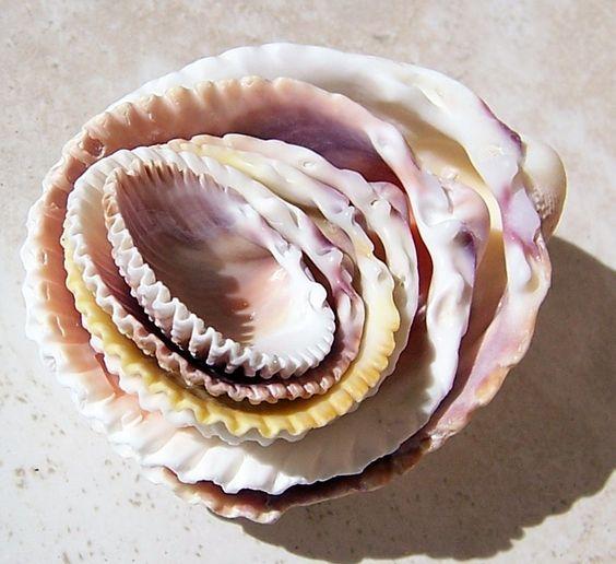 Nested Shells